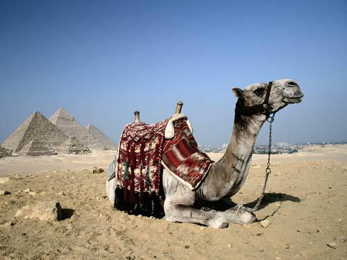 Продвижение в Египте