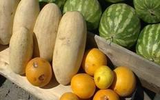 Дыни и арбузы